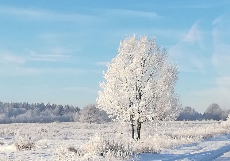 Snow Winter Cold Temperature Nature Landscape Outdoors Day