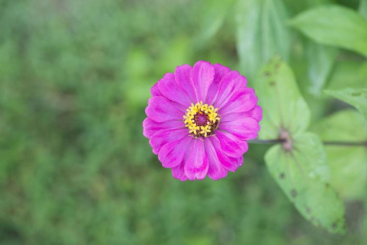 Blossom flower