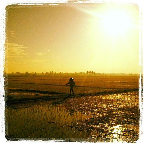 Magsasakang Bulakenyo. Sunrise Sunriselover Naturelover Saludo Ricefield BulacanBulacan Philippines @loves_philippines @tuklas_pilipinas @photosharingcommunity