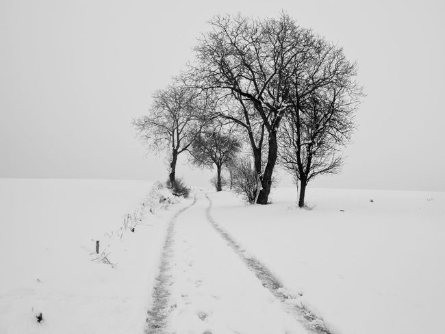 Austria Composition Ice Moment Road Bare Tree Beauty In Nature Branch Cold Temperature Day Landscape Lone Mood Nature No People Outdoors Scenics Sky Snow Traces Tranquil Scene Tranquility Tree Weather Winter