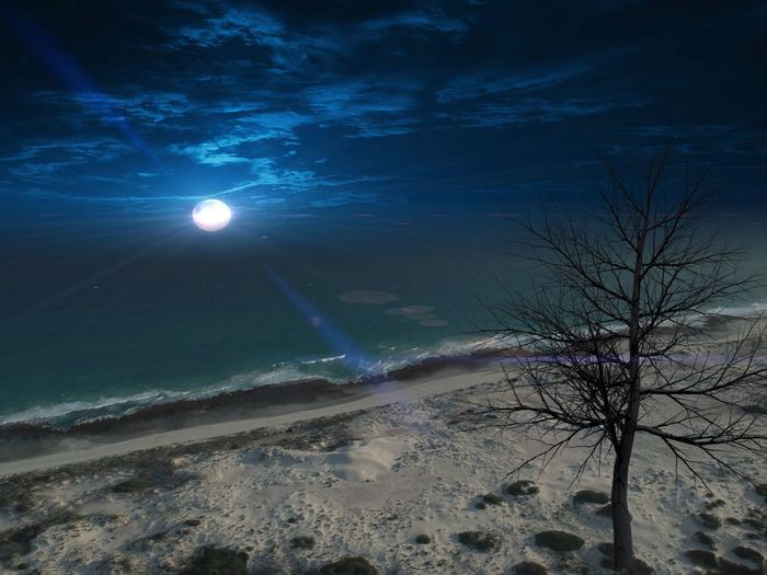 Moonlight Moon Night Sky Water Solitude Taking Photos Taking Pictures Coast Coastline Landscape Ocean Tree Night Land Beauty In Nature Night Scenics - Nature Nature Beach Water Non-urban Scene Sky Tree Illuminated Tranquil Scene Sand Sea Tranquility Outdoors Plant