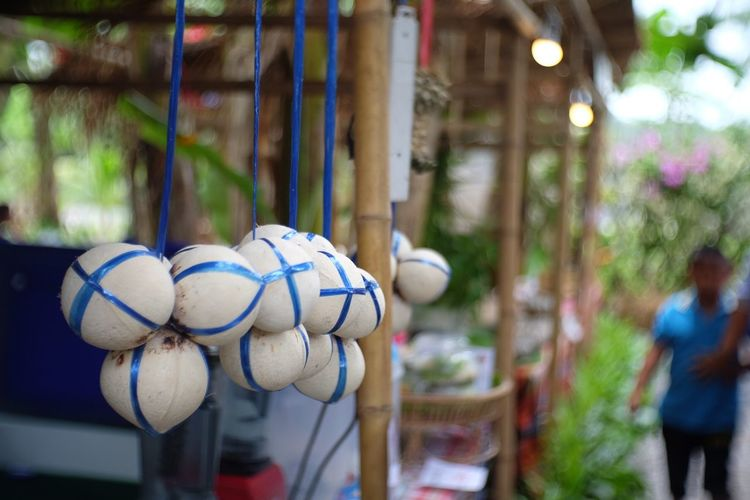 Close-up of coconuts hanging for sale at market stall