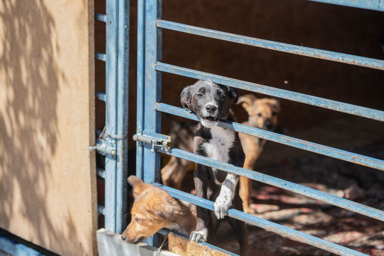 Puppies seen through metallic gate
