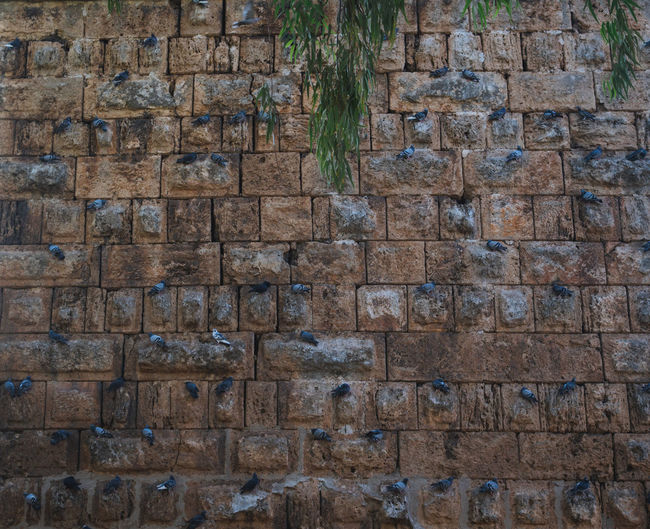 Full frame shot of stone wall with many doves on it
