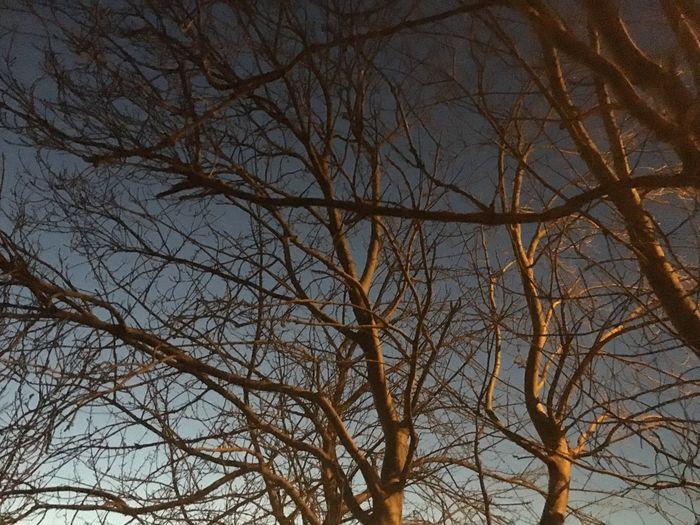 Trees Tree Dusk