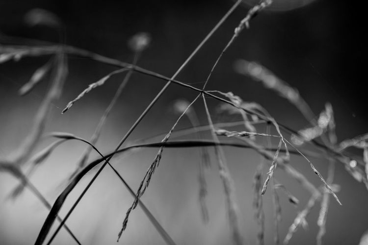 Lines and Shapes ~ Plant Close-up Selective Focus Nature Focus On Foreground No People Growth Day Beauty In Nature Tranquility Wire Outdoors Fence Grass Barrier Boundary Wire Mesh Protection Fragility Twig