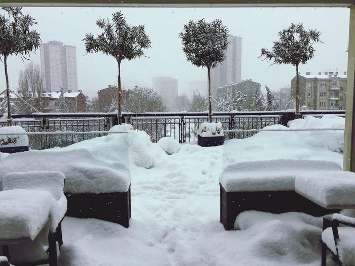 Snow Winter Cold Temperature Snowing No People