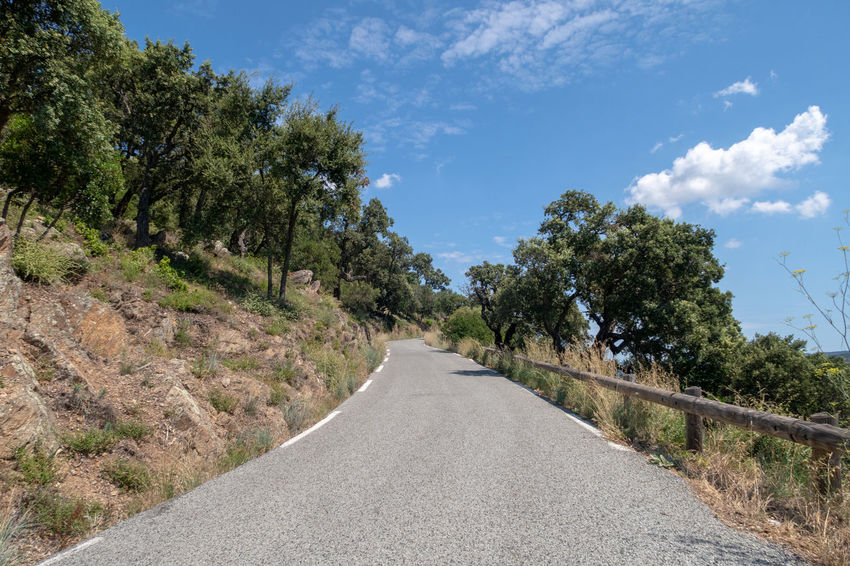 Marquis Massif Des Maures,Var Mediterranean  Cloud - Sky Day Diminishing Perspective Direction Empty Empty Road Environment Growth Landscape Mauresque Nature No People Outdoors Plant Road Scenics - Nature Sky The Way Forward Tranquility Transportation Tree Treelined vanishing point Winding Road