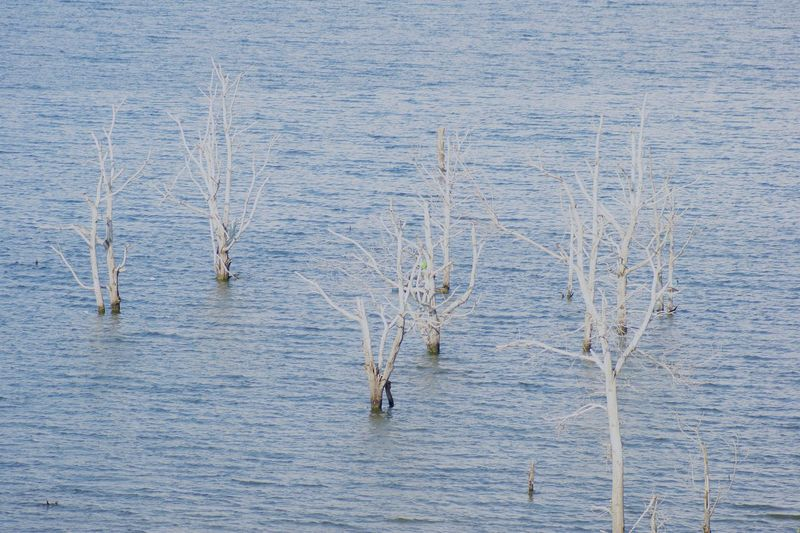 SURVIVE Tree Tree Trunk Trees Tree Area Tree_collection  Treetop Treelined Trees And Nature Shoreline Shore Water Lake Close-up Calm Countryside Lakeside Headland Fishing Pole