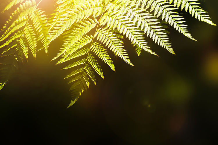 Beauty In Nature Close-up Day Fern Focus On Foreground Freshness Green Color Growth Leaf Leaves Nature No People Outdoors Pattern Plant Plant Part Selective Focus Sunlight Tranquility Tree