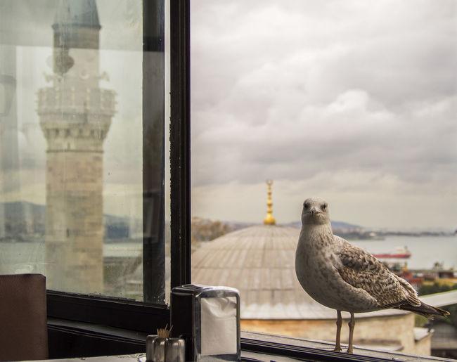 Seagull seen through window