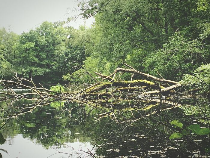 Fallen tree in a lake. Good weather means going cycling and that brings taking pictures in the game. Tree Lake Sunny Day