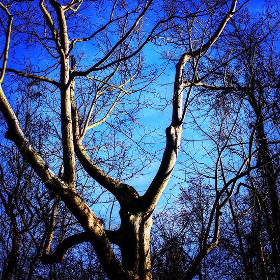 Winding Tree..