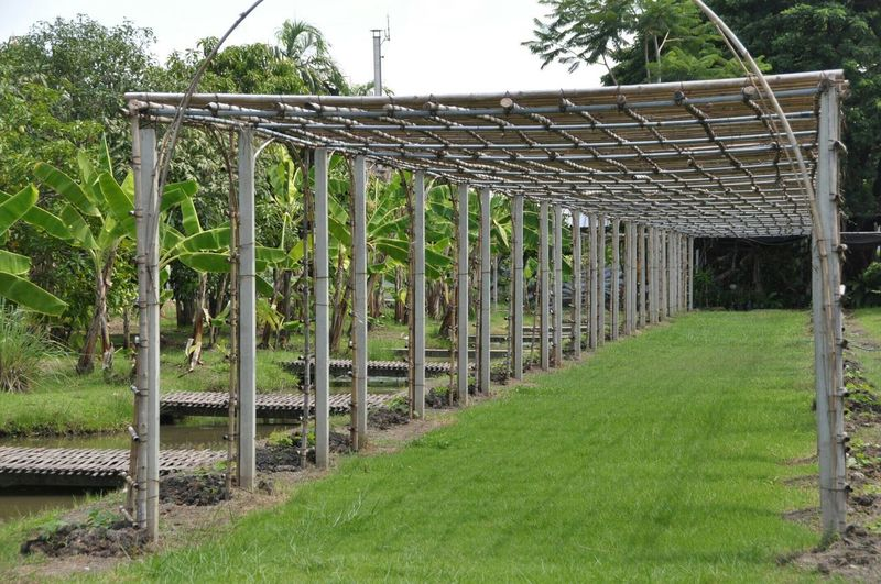 Bamboodesign Bamboo Frame Plant Nature No People Green Color Protection Field Fence Grass