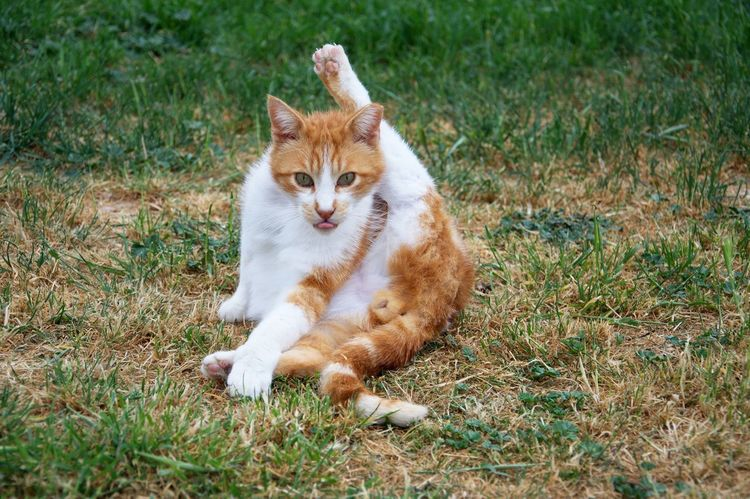 Portrait of funny cat with raised paw FUNNY ANIMALS Animal Animal Themes Animal Wildlife Cat Crazy Crazy Animals  Domestic Domestic Animals Domestic Cat Feline Field Ginger Cat Mammal Nature No People One Animal Paw Pet Pets Portrait Sitting Up Vertebrate Whisker