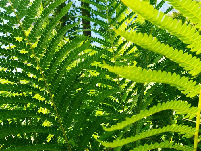 Fern Leaf Green