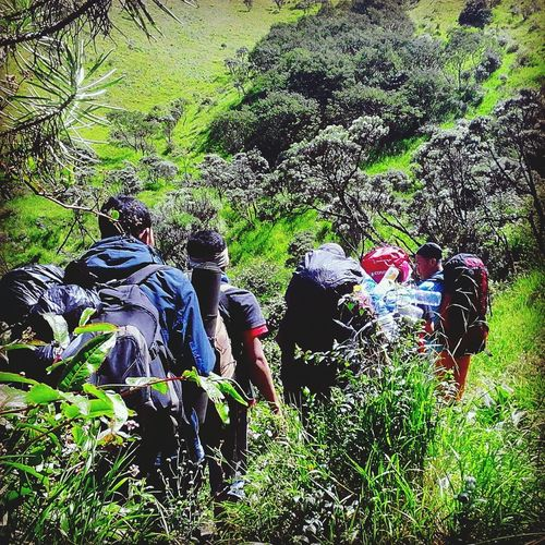 RePicture Leadership Mountain Hiking Mountaineers Green Green Green!  Merbabu Mountain Friend_spotlight