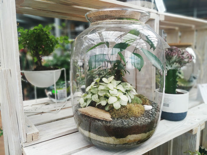 Close-up of potted plants in glass jar on table