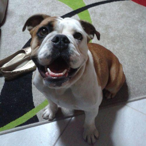 Boa Noite a todos Nofilter Bulldog Dog Cariocagram Brazil