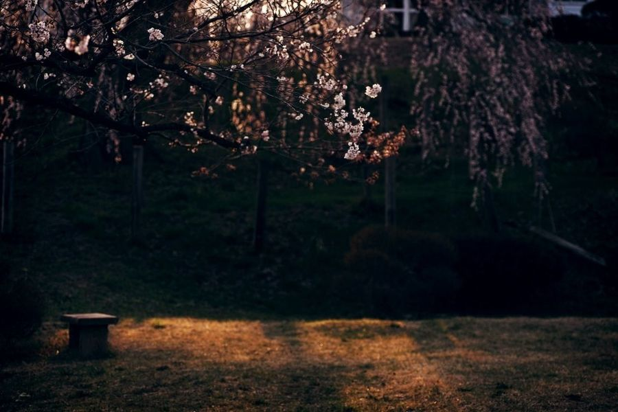 Light And Shadow Cherry Blossoms EyeEm Nature Lover