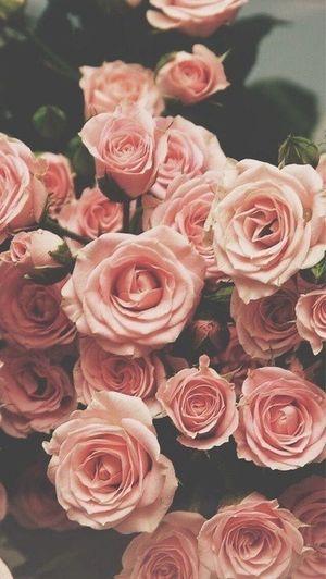 TakeoverContrast Pink Flowers Details Woman VSCO Nature Energy Natural Lifestyles Spring Morningmoment Demeter Pinkisthenewblack