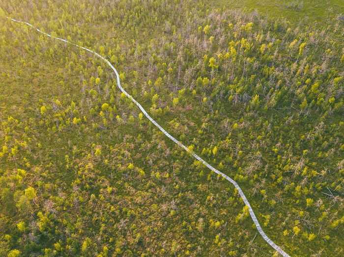Swamp, drone aerial view. Kaunas county, Lithuania DJI Mavic Pro DJI X Eyeem Drone  Kaunas County Lietuva Lithuania Nature Nature Swamp Aerial Agriculture Beauty In Nature Day Dubrava Environment Europe Field Garden Hose Grass Green Color Growth High Angle View Land Landscape Lithuania Travel Mavic Mavic Pro Nature No People Non-urban Scene Outdoors Plant Rural Scene Scenics - Nature Tranquility Yellow The Great Outdoors - 2018 EyeEm Awards