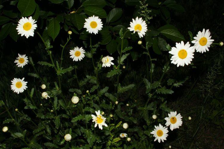 Flower Botany
