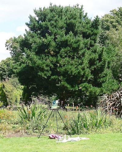 Trees growing in garden