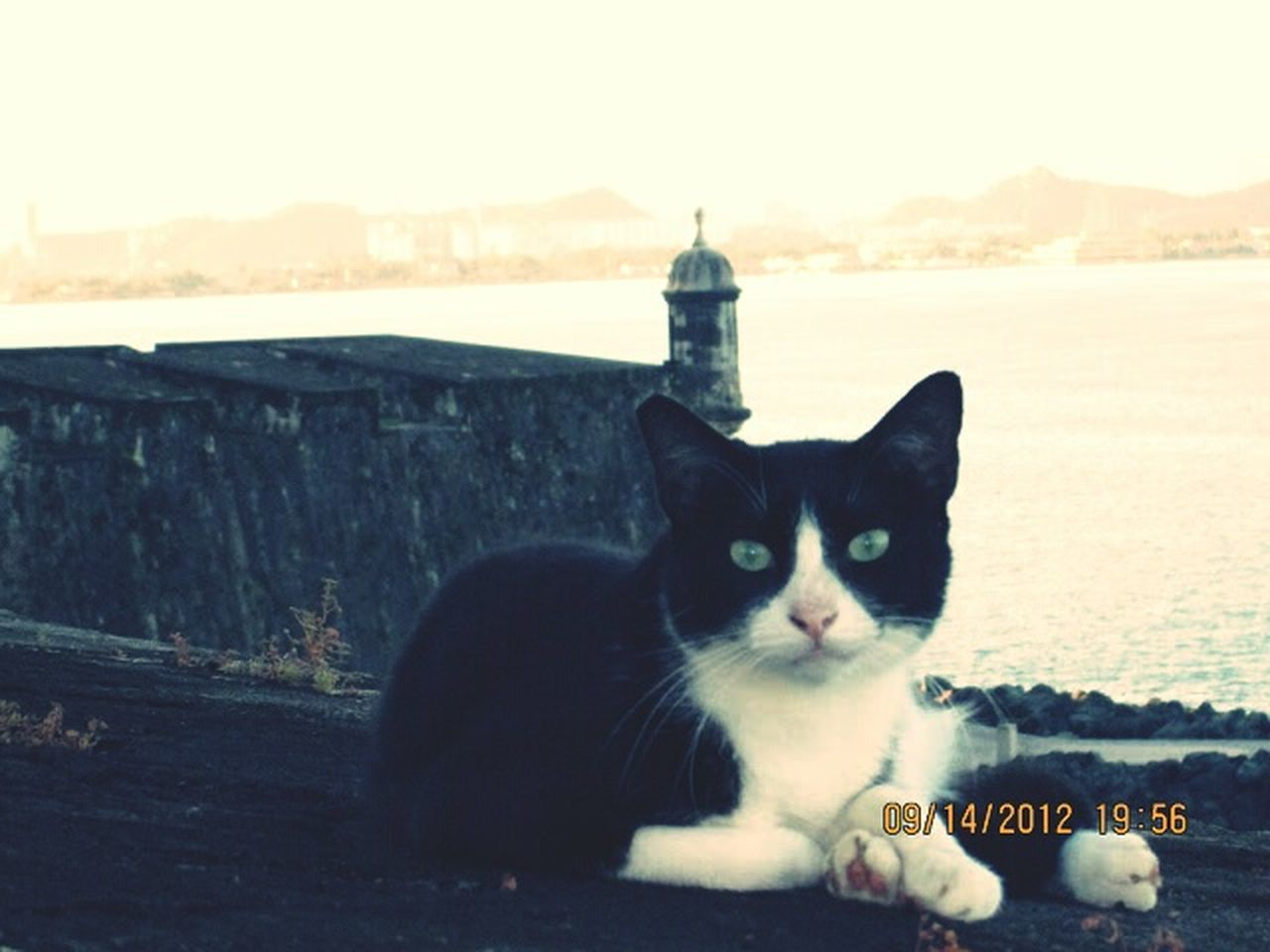 sea, animal themes, one animal, domestic cat, pets, beach, portrait, domestic animals, looking at camera, sunset, outdoors, no people, water, mammal, sky, day, nature
