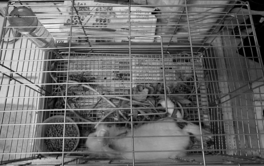 Snowball life in the cage 😌😌😌 Pet Rabbit 🐇