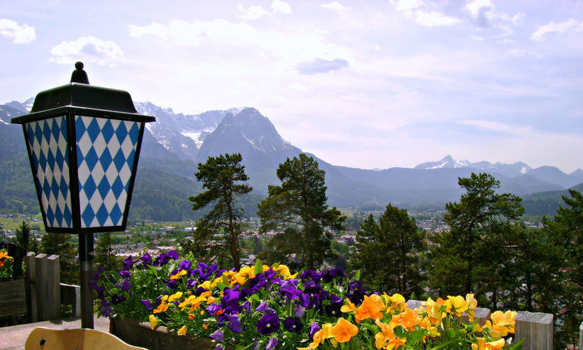 Bavarian Alps Bavarian Colors Bavarian Tradition Beauty In Nature Flower Mountain Mountain Range Multi Colored Nature No People Non-urban Scene Sky Yellow