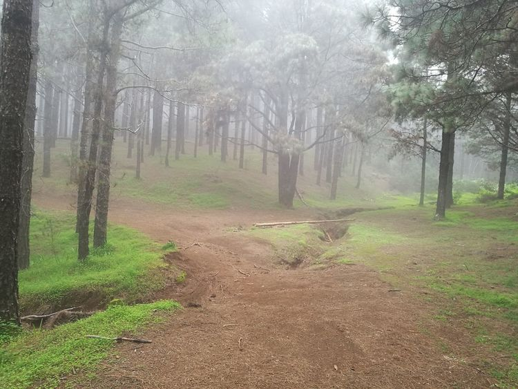 Las Raíces Tenerife Tree Nature Beauty In Nature Tranquility Tranquil Scene No People Forest
