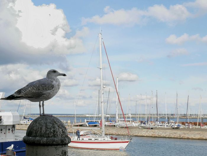 Seagull perching on a boat in sea