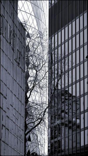 City Of London The Square Mile The Gherkin Architecture Modern Architecture Monochrome