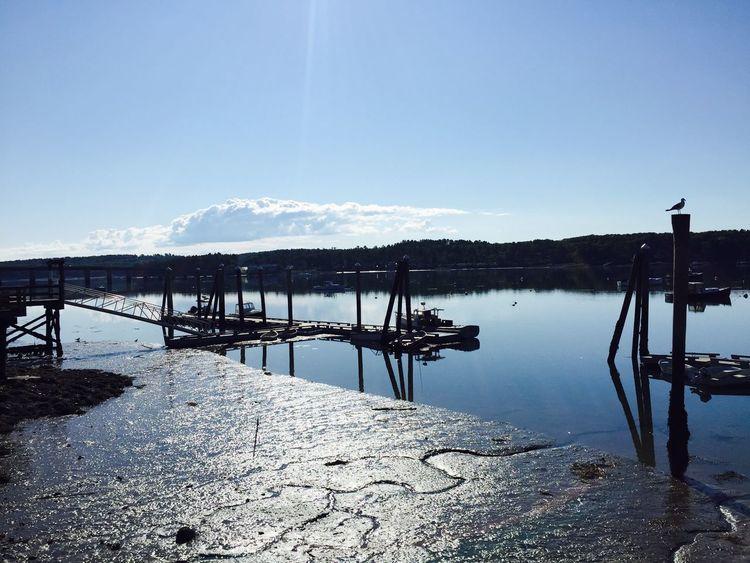 Low Tide Waterfront Taking Photos Sunny Day Blue Sky Maine Carol Sharkey Photography