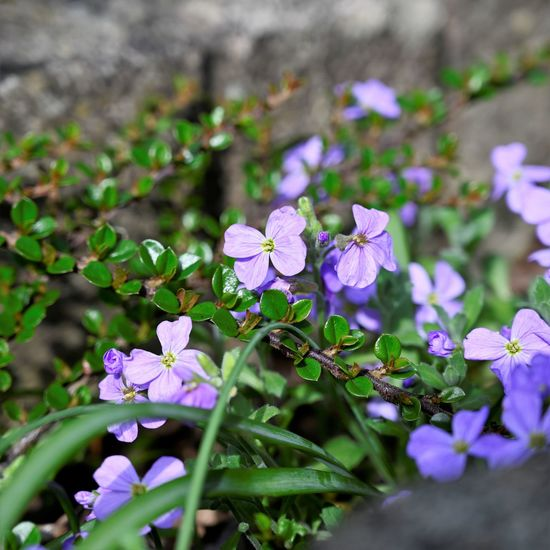 Purple flower Flowering Plant Flower Plant Freshness Fragility Vulnerability  Beauty In Nature Growth Petal Flower Head Close-up Inflorescence Nature Day No People Purple Outdoors