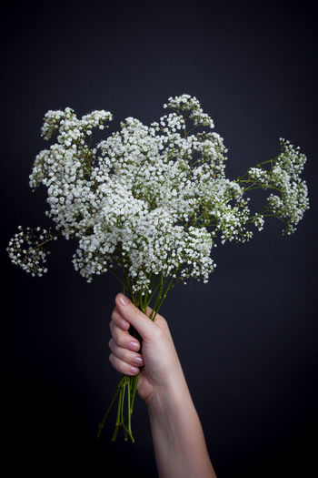 Flowers in front of a black background Bouquet Of Flowers Close-up Day Flower Freshness Holding Human Body Part Human Hand One Person One Woman Only Studio Shot