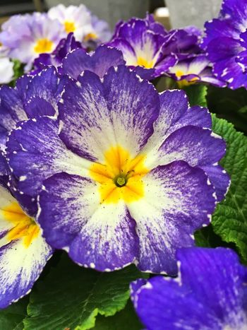 Flower Nature Petal Fragility Beauty In Nature Flower Head Growth Freshness No People Close-up Plant Purple Blooming Outdoors Day Water