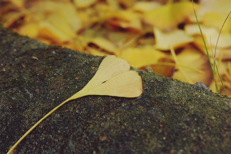 One leaf know fall