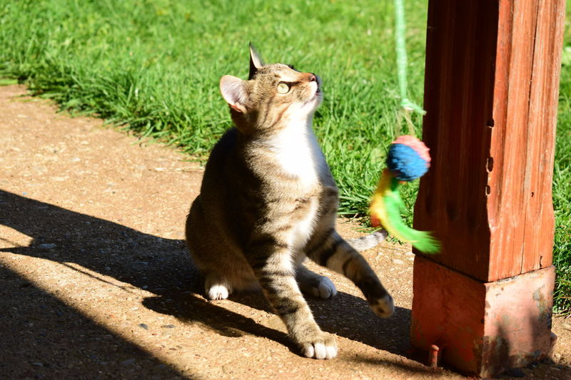 EyeEm Best Shots EyeEm Nature Lover EyeEm Gallery EyeEmNewHere Grass In Motion Playing With The Animals Animal Themes Cat Cat In Action Cats Playing Cat♡ Day Domestic Cat Eye4photography  No People One Animal Outdoors Pets Playful Cat Shadow Sitting Sunlight