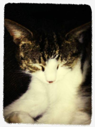 First Eyeem Photo Little Cat CUTIE!!