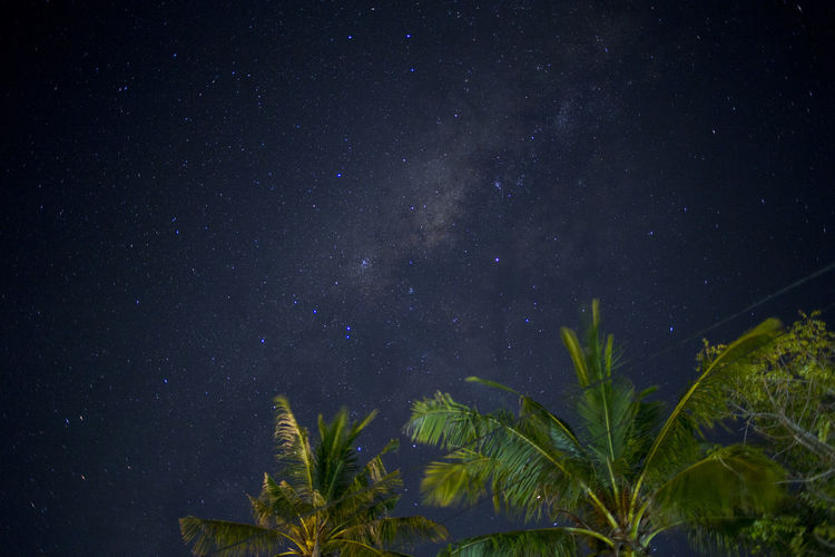 Astronomy Beauty In Nature Constellation Dark Galaxy Low Angle View Milky Way Nature Night Outdoors Palm Trees Scenics Sky Space Space And Astronomy Star - Space Star Field Tree