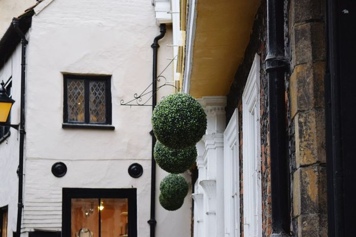 Old Buildings Topiary Hanging Out In A LINE The Purist (no Edit, No Filter) Norwich Nikonphotography Taking Photos Out And About Decorative