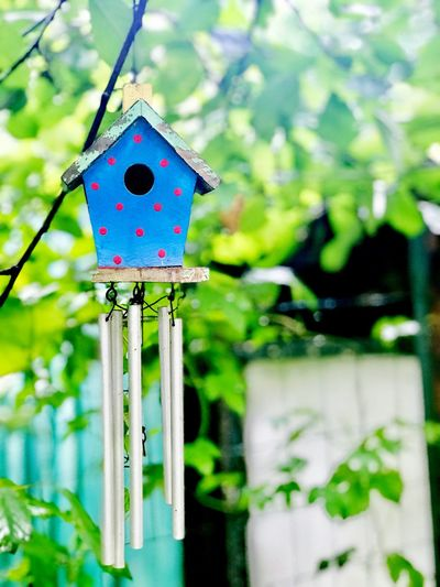 Birdhouse No People Focus On Foreground Close-up Plant Day Decoration Hanging Nature Outdoors Green Color Animal Themes Animal Tree Art And Craft Birdhouse Representation Creativity Animal Wildlife Craft
