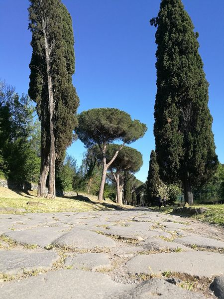 Italy🇮🇹 Tree Blue Outdoors Old Ruin History Beautiful Italy🇮🇹 Old Road Roman Ruines