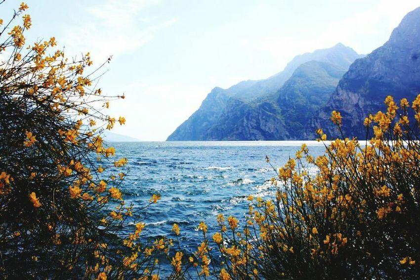 First Eyeem Photo Garda Lake Lacke Summer ☀ Ginestre Yellow Flower