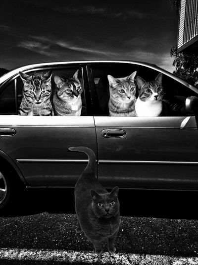 Drove all night through the crying rain to get here, belting out anguish along with Judy Garland & Dinah Washington on the car stereo, brought friends. @hawkeyedoyle @Hankanon @moopaint @FidleDD Tadaa Community Mel&BomBi Tadaa Cat