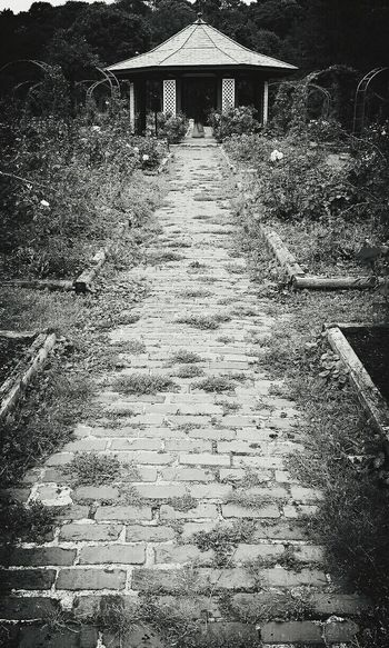 Brickpathways Garden Pathways Garden Photography Blk N Wht Blackandwhite Photography