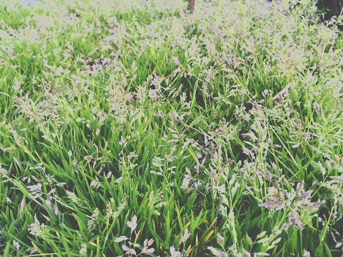 Grass Travel Nature Spring Vilkovo