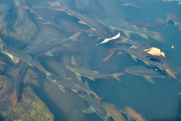 Aerial view of fish underwater